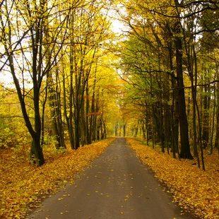 Więcej o: Dyżury specjalisty ds. lasów