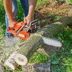 Informacja dot. nowych przepisów w zakresie wycinki drzew