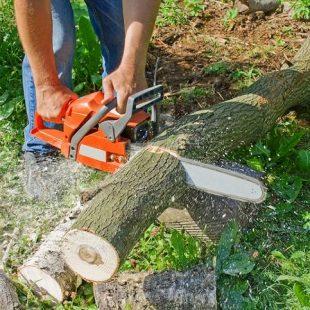 Więcej o: Informacja dot. nowych przepisów w zakresie wycinki drzew