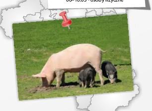 Więcej o: Badanie pogłowia świń
